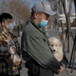 COVID-19 в Китае: число больных продолжает падать
